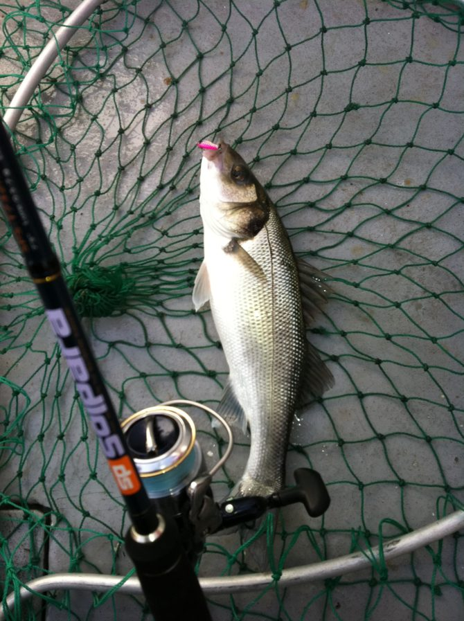 Bass on Pink Metal Jig