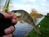 Perch on the Canal