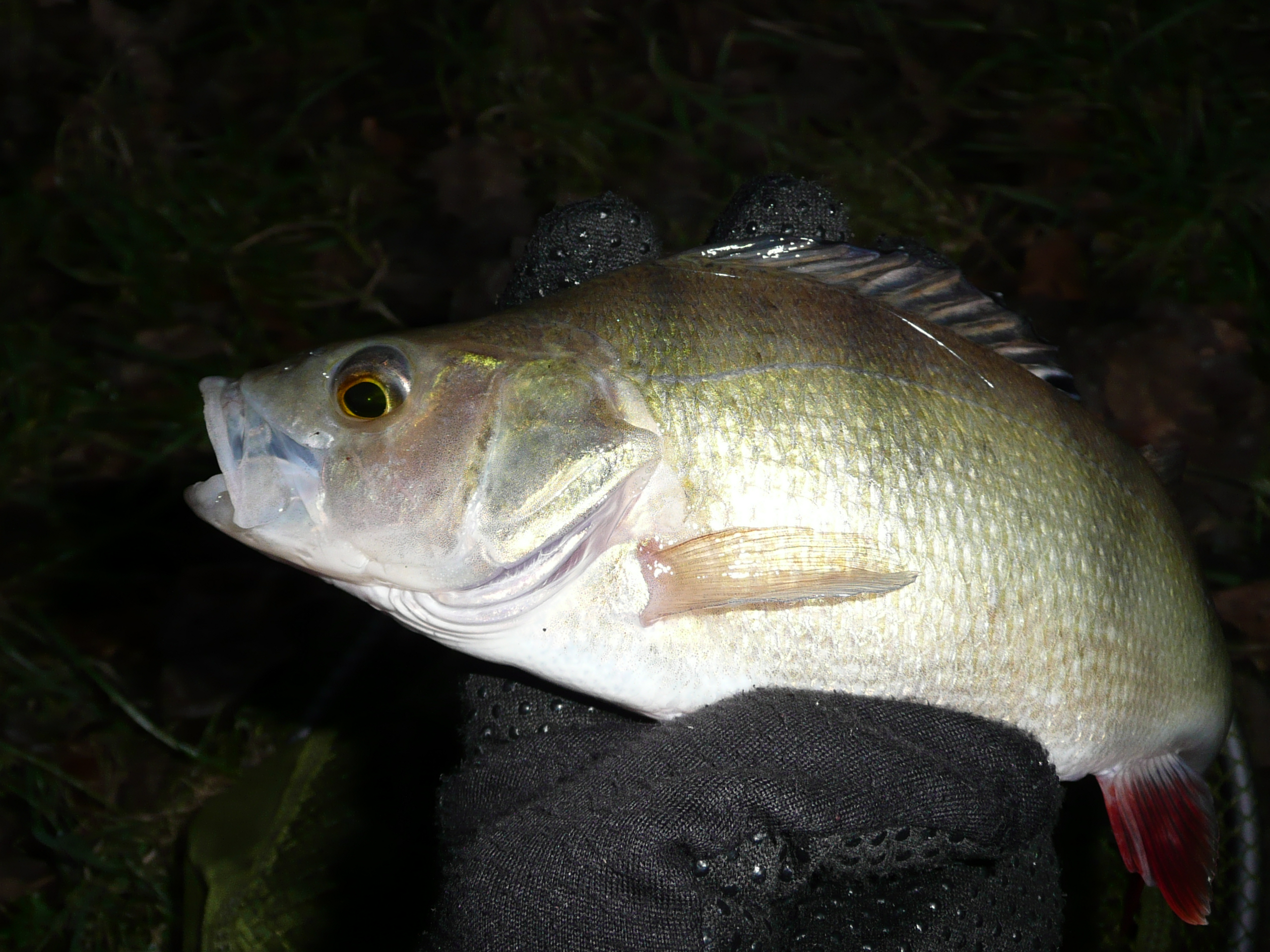 Perch After Dark