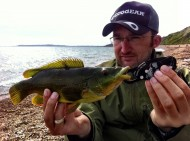 Wrasse off the Beach