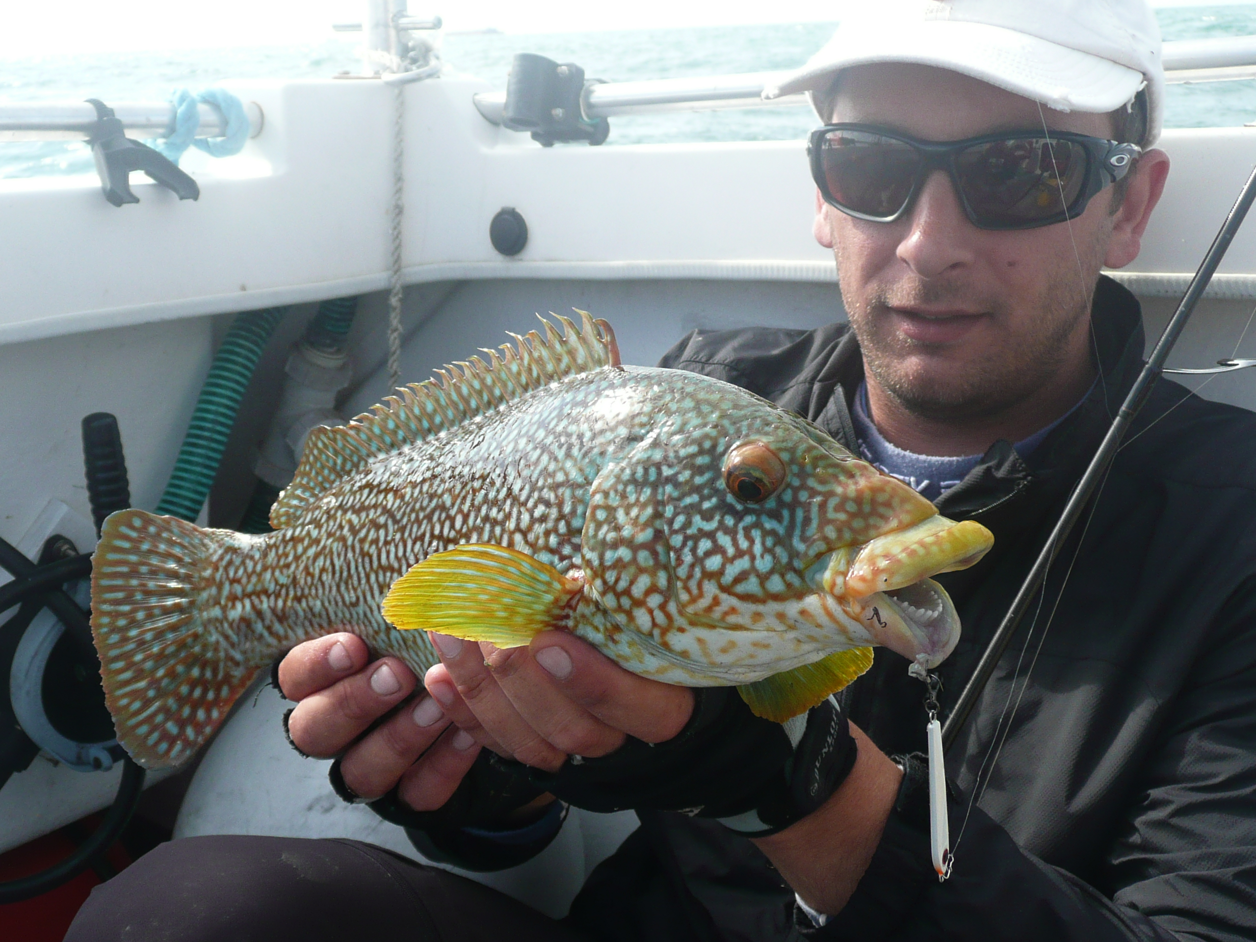 Clonking Wrasse on Micro Jig