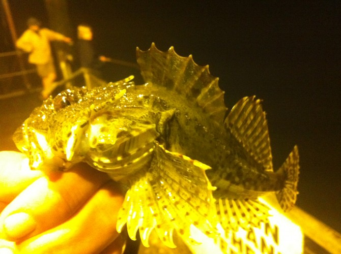 Scorpion Fish Night Games