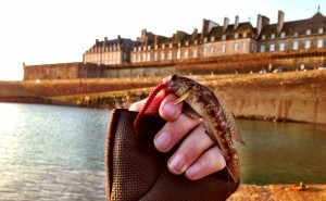 St Malo LRF Goby
