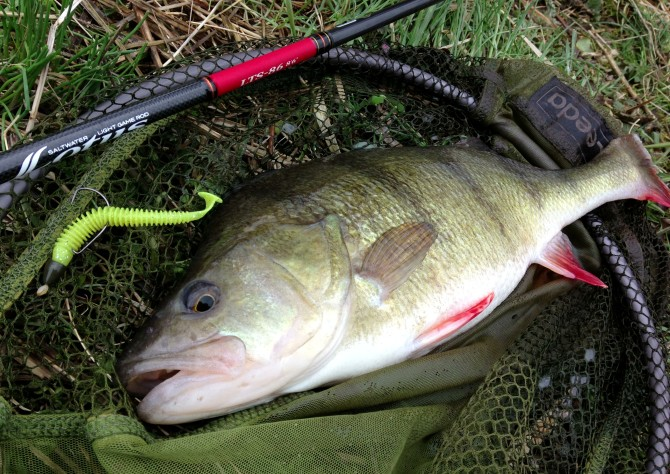 Biggest Perch on Keitech Swing Impact