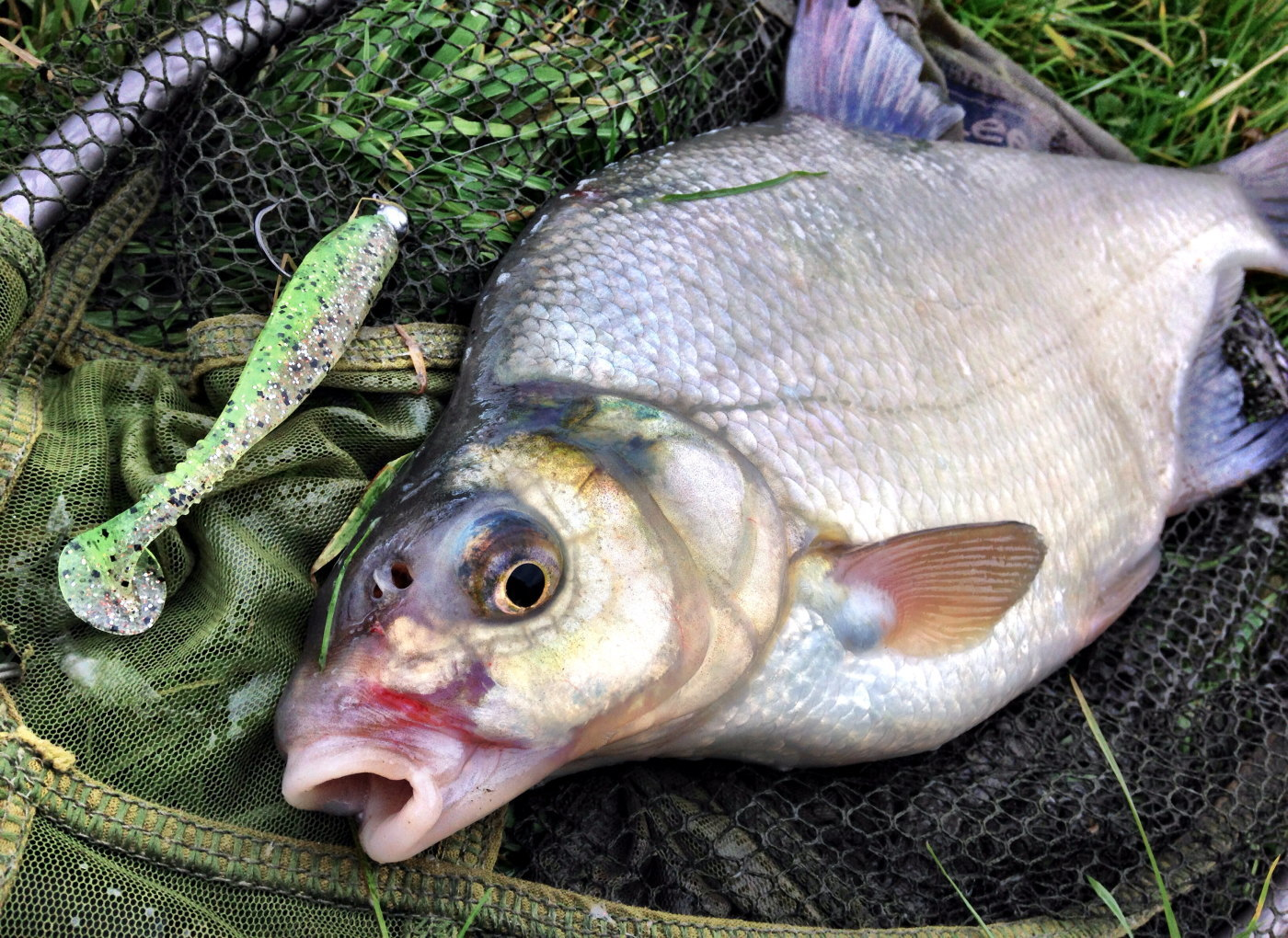 Lure caught bream freshwater for Bluegill fishing tackle