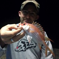 Squirrelfish Night Games
