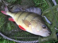 Kennet and Avon Canal Perch