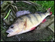 Perch on Chart HTO Flail