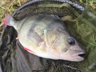 Kennet & Avon Perch