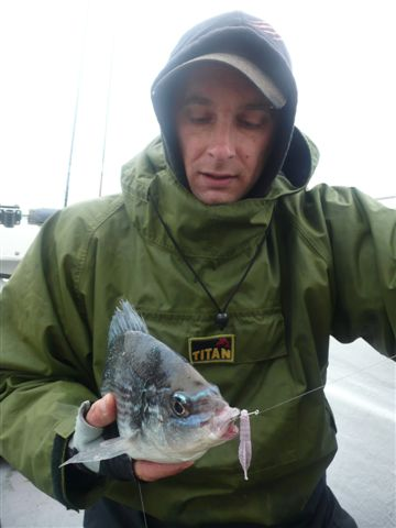 Lure Caught Bream