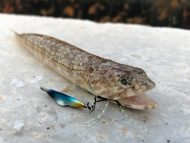 Lizardfish on Blueblue Searide Mini