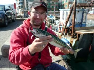 Mackerel in the Harbour