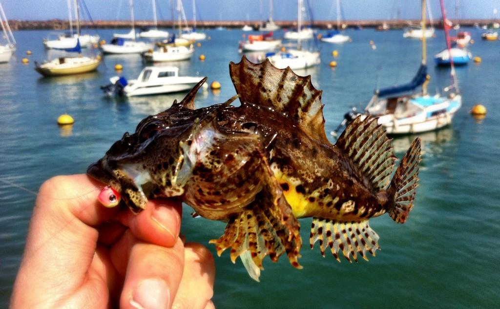 Nice Scorpion Fish