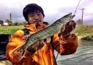 Masaaki's Jack Pike