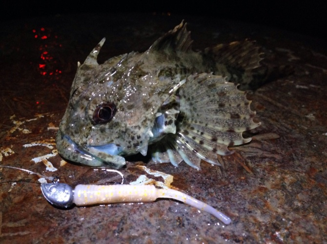 Sea Scorpion on Straw Tail