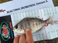 Lure Caught Black Bream