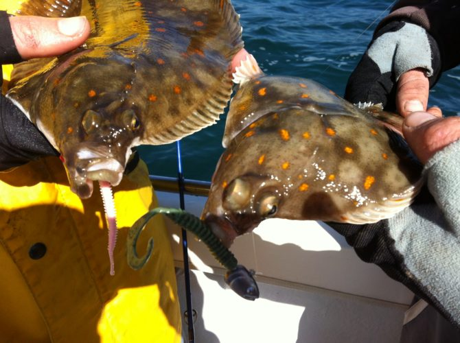 Plaice on Lures