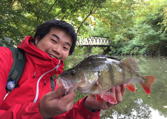 Masa with large Thames Perch