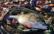 Winter Perch Fishing