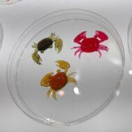 Nikko Super Little Crabs 1-inch