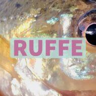 Ruffe